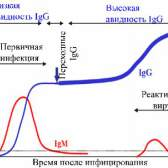 Імуноферментний аналіз (іфа)