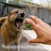 Якими хворобами собака може нагородити людину?