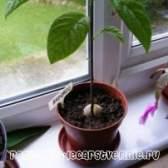 Кімнатні рослини в домашніх умовах