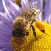Лікувальна користь квіткового пилку