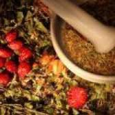 Лікарські рослини для лікування бронхіту