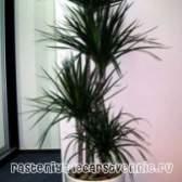 Невибагливі тіньолюбиві кімнатні рослини