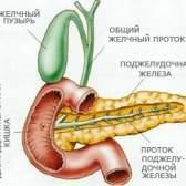 Підшлункова залоза - лікування травами