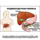 Підшлункова залоза. Симптоми хвороби, лікування