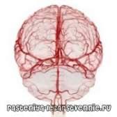 Препарати для поліпшення мозкового кровообігу мозку людини - які?