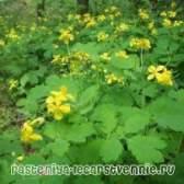 Застосування лікарських отруйних рослин в народній медицині