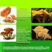 Їстівні і неїстівні гриби в лісі, опис
