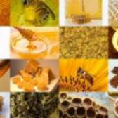 Види меду, мед і продукти бджільництва