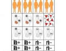Аборт при негативному резус фактор крові