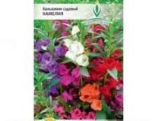 Бальзамін садовий - про вирощування з насіння, догляду