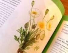 Цілющі рослини з червоної книги