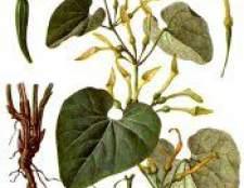 Кирказон - лікування, застосування, протипоказання