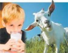 Козяче молоко для грудних дітей і немовлят