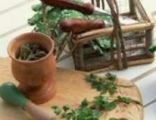 Лікувальні пряні трави і їх властивості