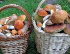 Лікувальні властивості білих грибів
