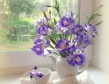 Лізіантус. Фото лізіантус. Вирощування квітки лізіантус на дачі. Лізіантус в домашніх умовах