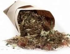 Настої трав для підвищення імунітету