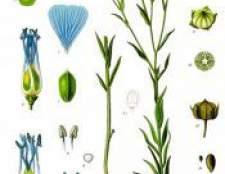 Рослина льон посівної