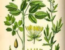 Рослина василистник жовтий